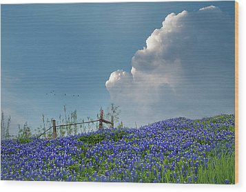 Wood Print featuring the photograph Texas Bluebonnets And Spring Showers by David and Carol Kelly