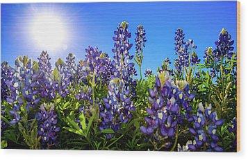 Texas Bluebonnets Backlit II Wood Print by Greg Reed