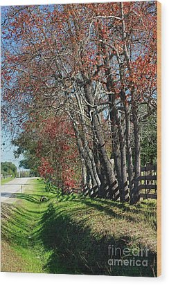 Wood Print featuring the photograph Texas Fall by Lori Mellen-Pagliaro