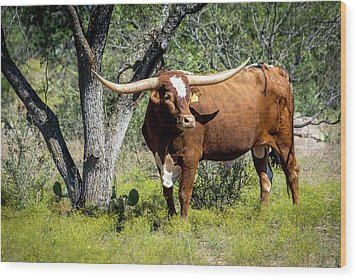 Wood Print featuring the photograph Texas Longhorn Steer by David Morefield