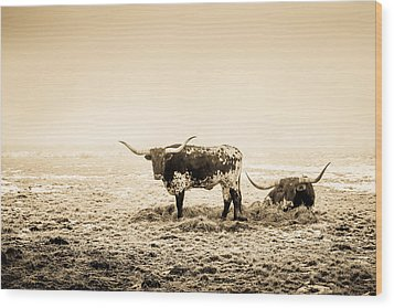 Texas Longhorns Wood Print