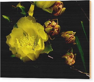 Texas Rose Vi Wood Print by James Granberry