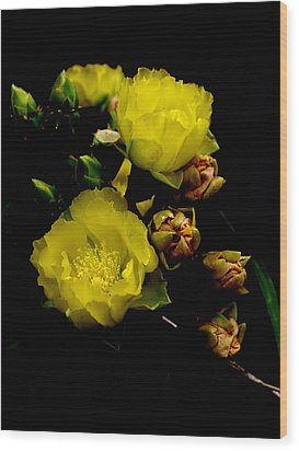 Texas Rose Vii Wood Print by James Granberry