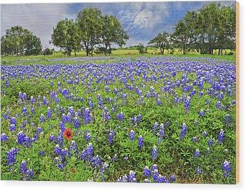 Texas Spring  Wood Print