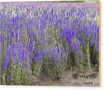 Texas Wildseed Farm Wood Print