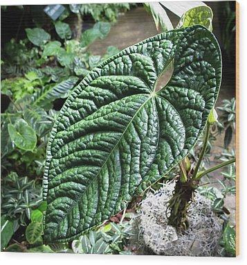 Texture Of A Leaf Wood Print