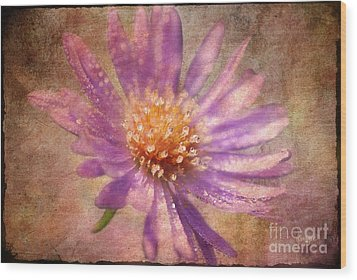 Textured Aster Wood Print by Lois Bryan