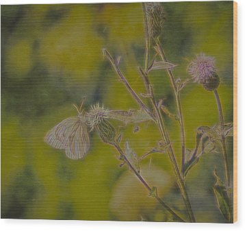 Textured Butterfly 1   Wood Print