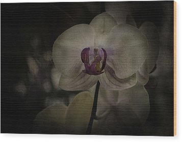 Wood Print featuring the photograph Textured Flower by Ryan Photography