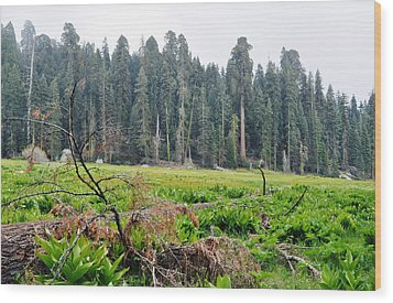 Wood Print featuring the photograph Tharps Log Meadow by Kyle Hanson