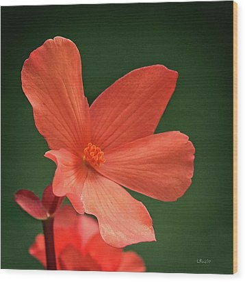 That Orange Flower Wood Print