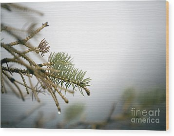 Thaw Wood Print by Jeannie Burleson