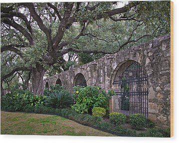 The Alamo Oak Wood Print by David and Carol Kelly