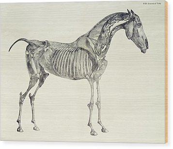 The Anatomy Of The Horse Wood Print by George Stubbs