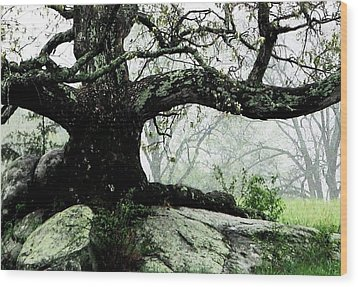 The Ancient One Wood Print by Angela Davies