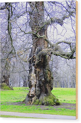 The Ancient Trees Of London Wood Print by Mindy Newman