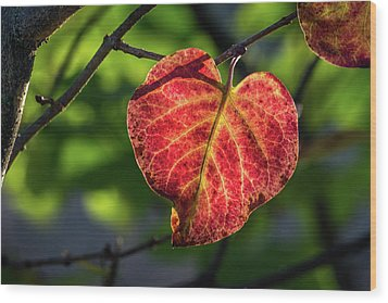 Wood Print featuring the photograph The Autumn Heart by Bill Pevlor
