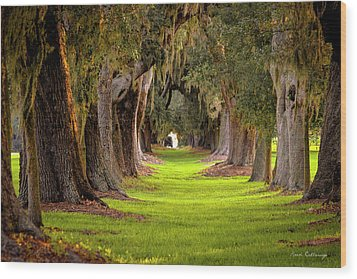 The Avenue Of Oaks 4 St Simons Island Ga Art Wood Print by Reid Callaway