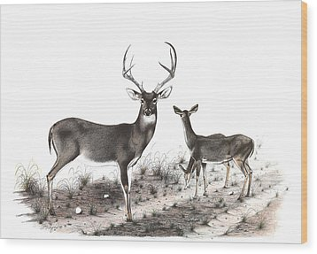 The Backroad Wood Print by Steve Maynard