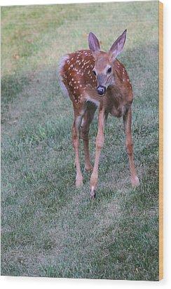 The Bambi Stance Wood Print by Karol Livote