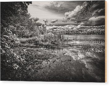 Wood Print featuring the photograph The Basin And Snails by Bob Orsillo