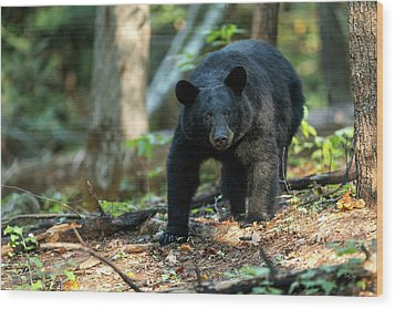 Wood Print featuring the photograph The Bear by Everet Regal