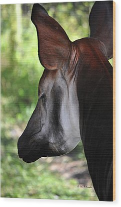 The Beautiful Okapi 01 Wood Print by John Knapko