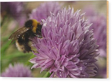 Wood Print featuring the photograph The Bees Are Back In Town II by Michael Canning
