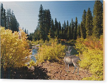 Wood Print featuring the photograph The Bend Of The Rogue River by Diane Schuster