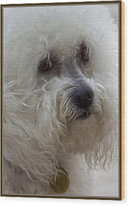 The Bichon Frise Wood Print by Lynn Andrews