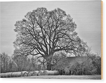 Wood Print featuring the photograph The Big Tree by Ron Dubin