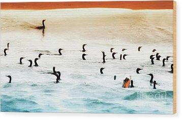 The Birds Santa Rosa Island Wood Print by Gus McCrea