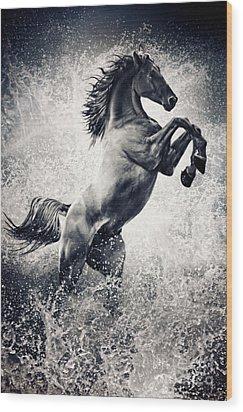 The Black Stallion Arabian Horse Reared Up Wood Print