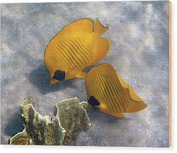 The Bluecheeked Butterflyfish Wood Print