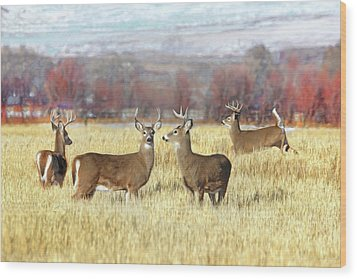Wood Print featuring the photograph The Bucks Stop Here White-tail Deer  by Jennie Marie Schell