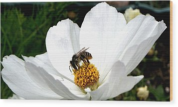 Wood Print featuring the photograph The Busy Bee by Carol Grimes