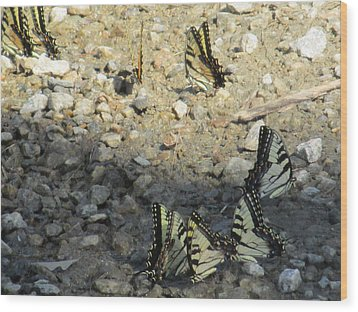 The Butterfly Dance Wood Print