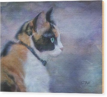 Wood Print featuring the digital art The Calico Staredown  by Colleen Taylor