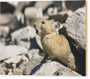 Wood Print featuring the photograph The Call Of The Pika by DeeLon Merritt
