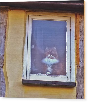 The Cat In The Window Wood Print by Anne Kotan