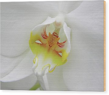 Wood Print featuring the photograph The Cat Side Of An Orchid by Manuela Constantin