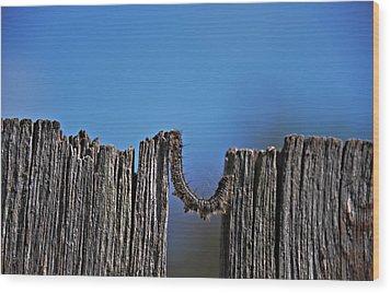 The Caterpillar Wood Print by Cendrine Marrouat