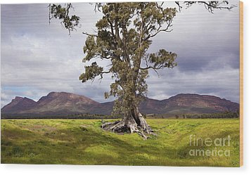 Wood Print featuring the photograph The Cazneaux Tree by Bill Robinson