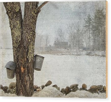 Collecting Sap For Making Maple Syrup Wood Print by Betty  Pauwels