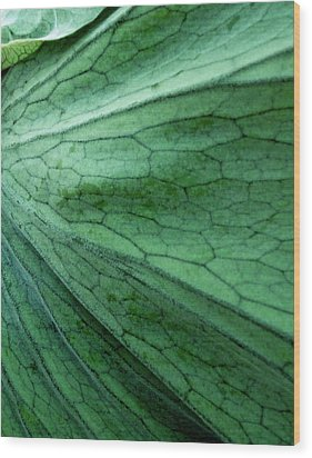 The Color Green Wood Print by Gwyn Newcombe