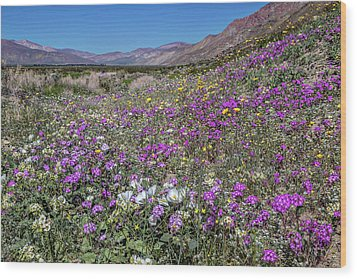 Wood Print featuring the photograph The Colors Of Spring Super Bloom 2017 by Peter Tellone