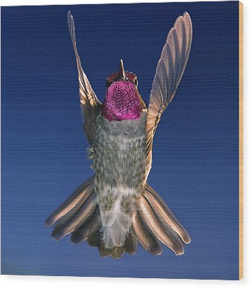 Wood Print featuring the photograph The Conductor Of Hummer Air Orchestra by William Lee