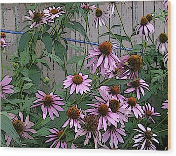 The Coneflowers Wood Print