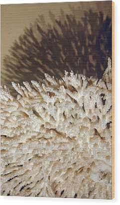 The Coral Wood Print by Jez C Self