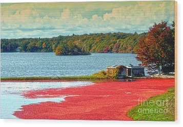 The Cranberry Farm On Cape Cod Wood Print by Gina Cormier
